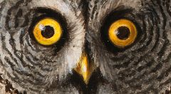 Wilhelm von Wright: Great Grey Owl (undated), detail. Finnish National Gallery / Ateneum Art Museum, Beatrice Granberg Collection. Photo: Finnish National Gallery / Tero Suvilammi.
