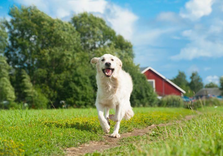 Koiran-, kissan- ja fretinpennut (EU-maat)