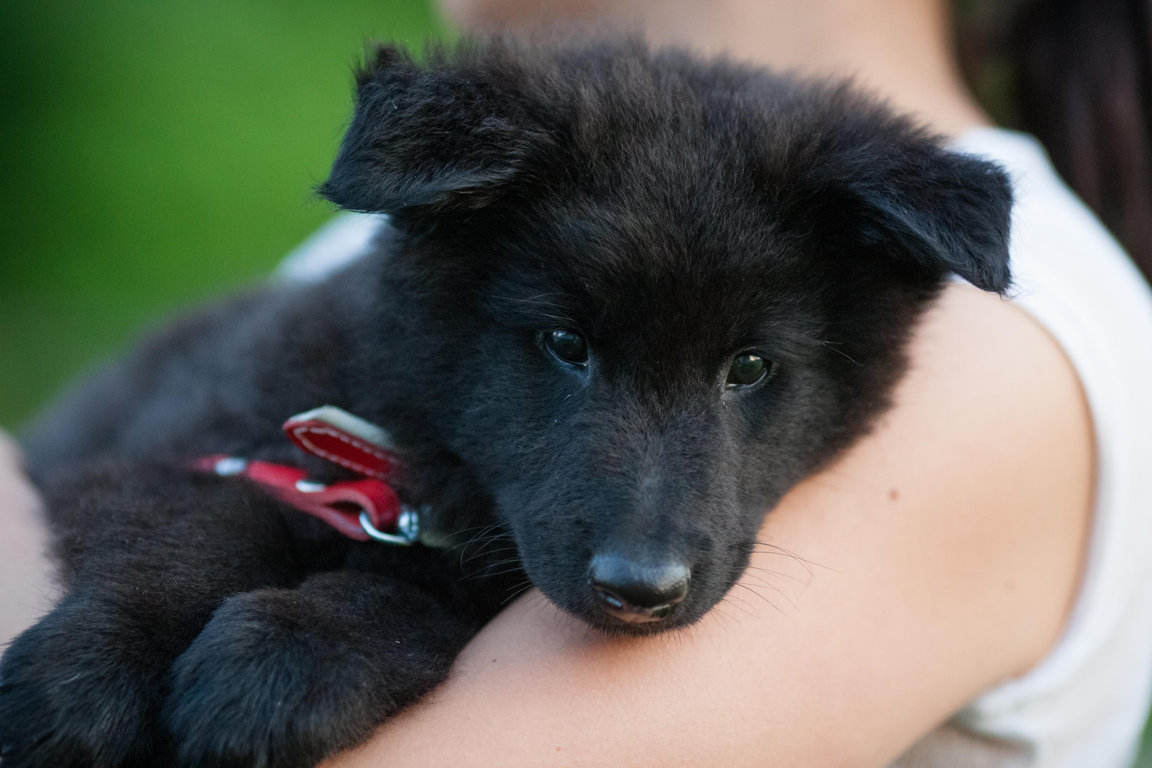Koirien rekisteröinti tulee pakolliseksi – taustalla pentutehtailu ja irrallaan olevat koirat